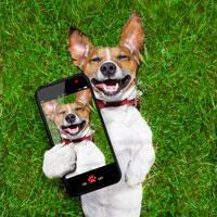 selfiehund-200px